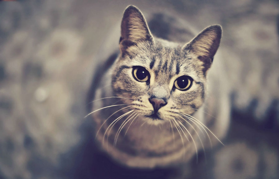 Искусство общения с кошкой