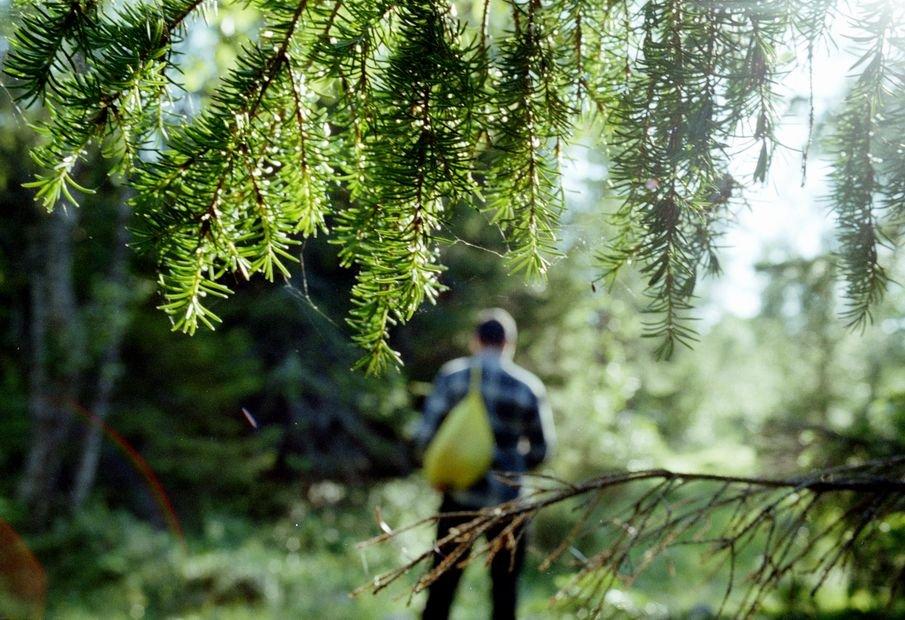 Основные правила передвижения по лесу