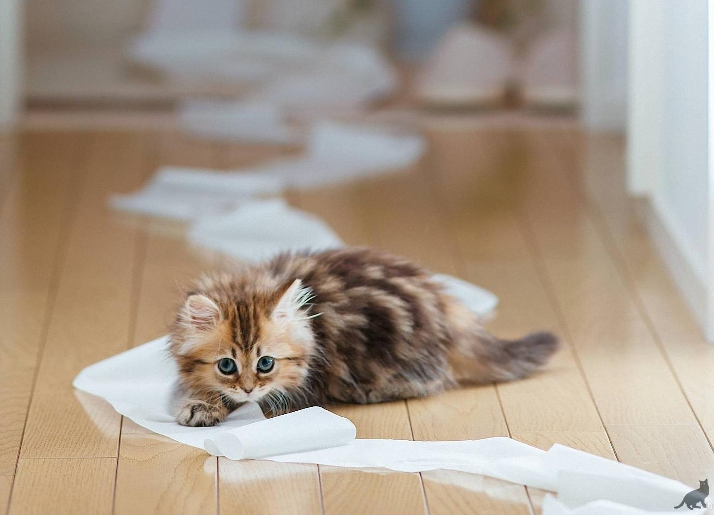 Если в доме появился котенок