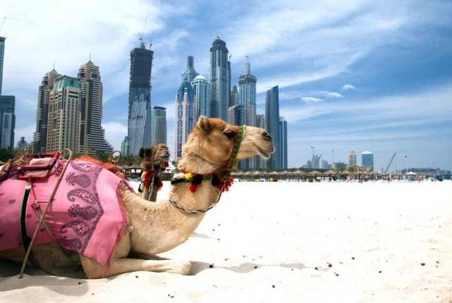 Новый год и отдых в ОАЭ