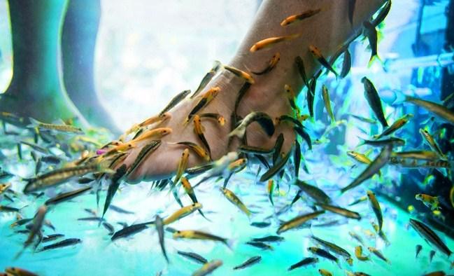 Незабываемый пилинг рыбками