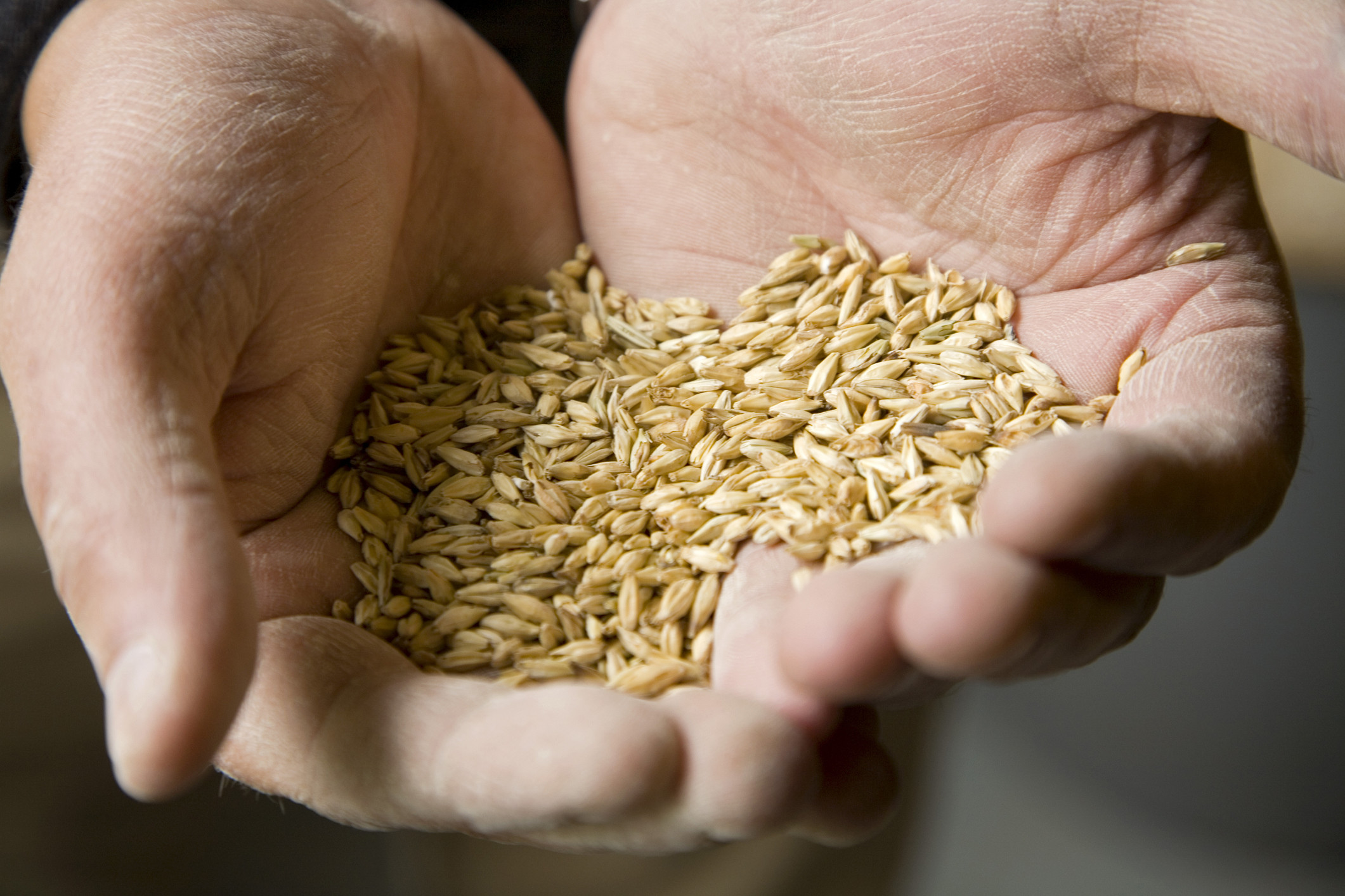 Как высушить зерно?