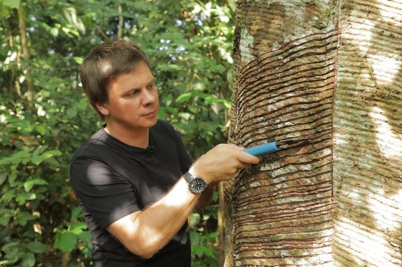Мир наизнанку Дмитрий Комаров будет добывать каучук