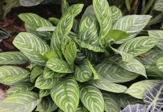 Как ухаживать за комнатными декоративно-лиственными растениями?