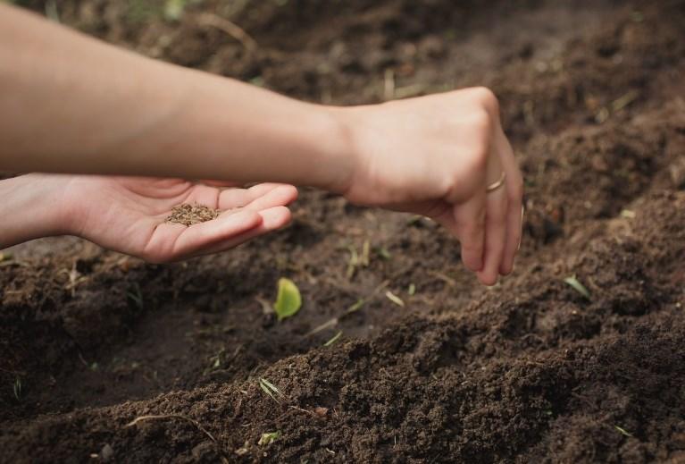 Подготовка семян зелени к посадке