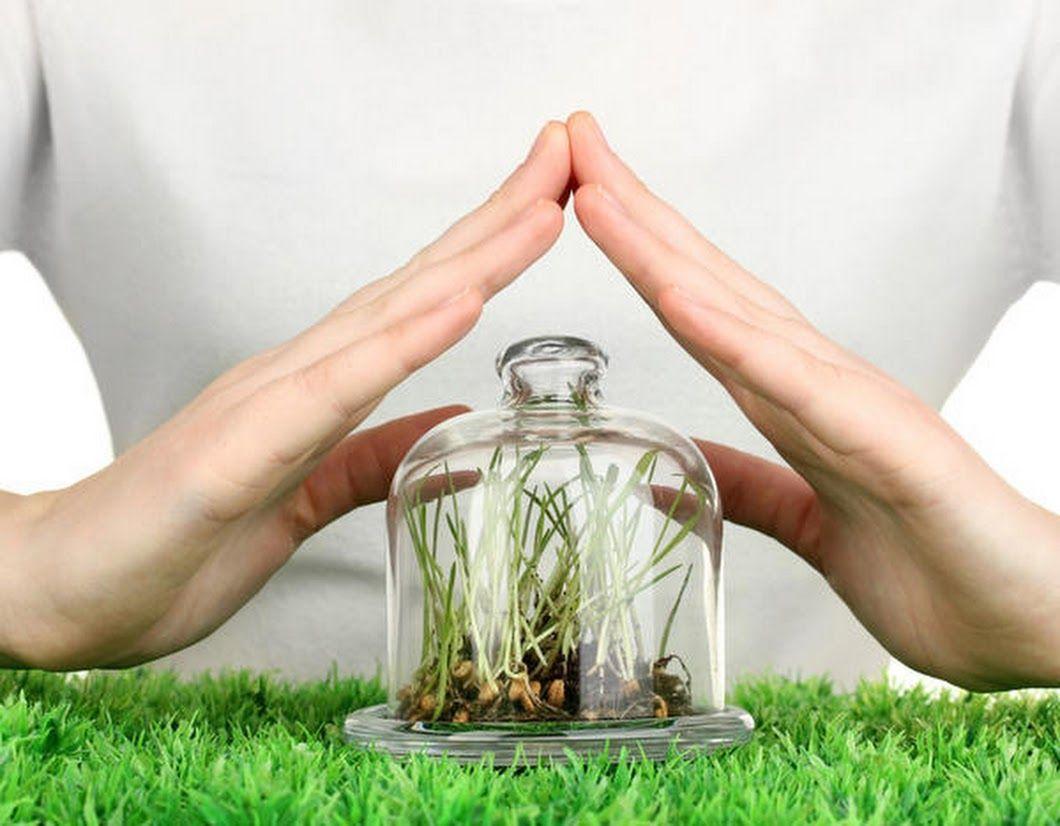 Как правильно защитить растения от вредителей и болезней
