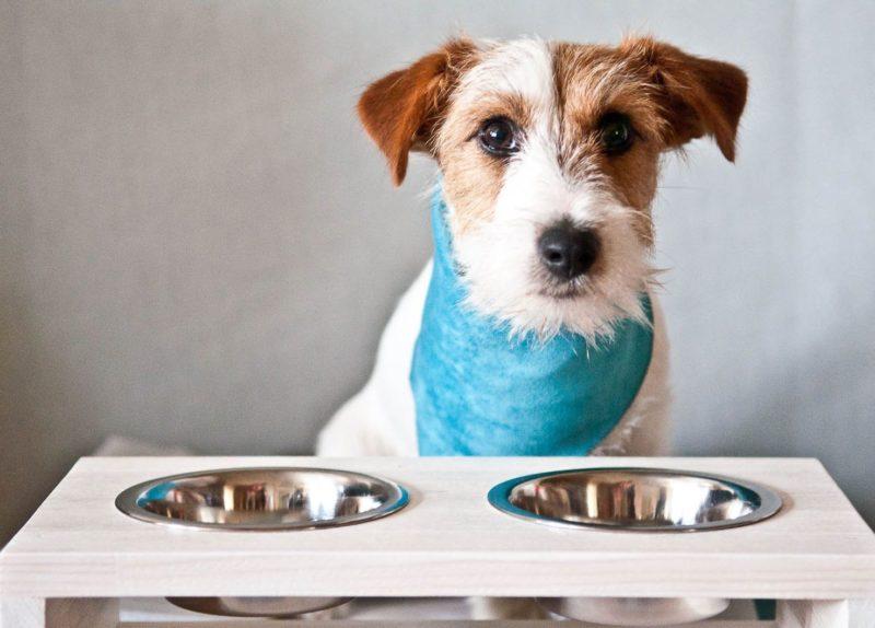Как сэкономить на покупке корма для домашних животных?