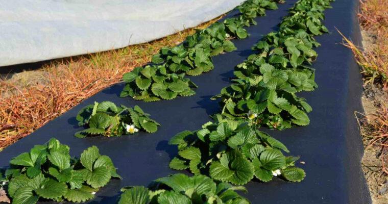Агроткань и агроволокно: в чем разница и что лучше использовать